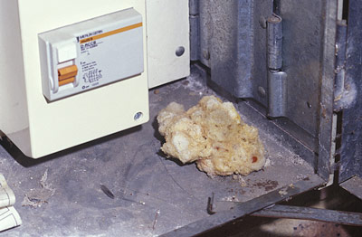 A nest of the introduced Meter-box Carder Bees within an electricity meter box. The cotton-wool consistency of the nest cells is unlike any native Australian bee.